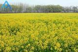 黄河稻夫第二届油菜花节暨农耕文化节开幕式在新乡原阳成功举办