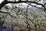 阆中-裕华镇